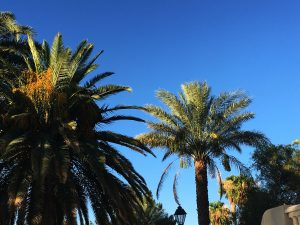 orange county palm tree trimming photo 2