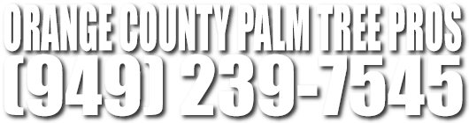 Orange County Palm Tree Trimmers