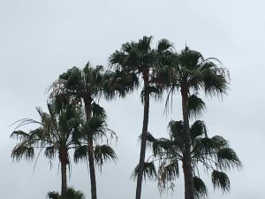 orange county palm tree trimming photo