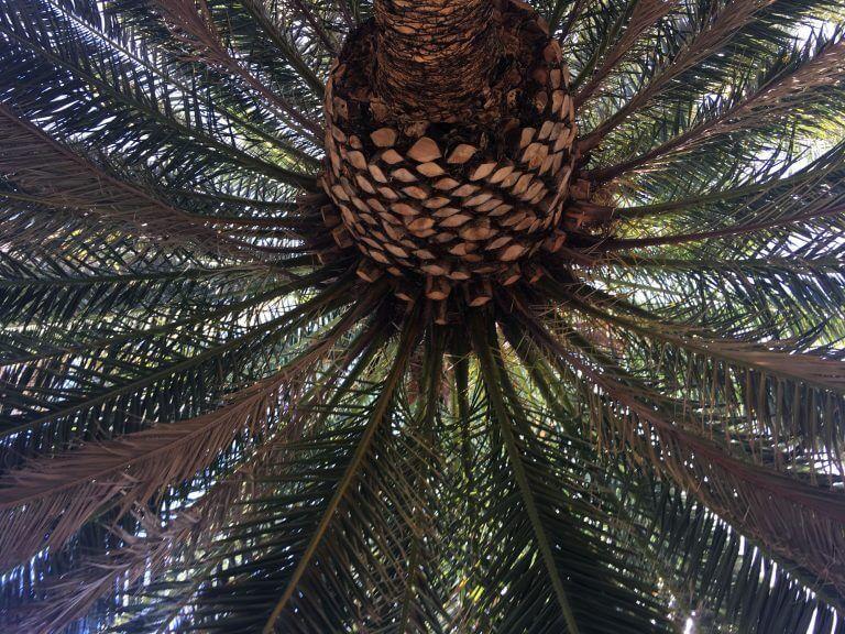orange county palm tree trimming