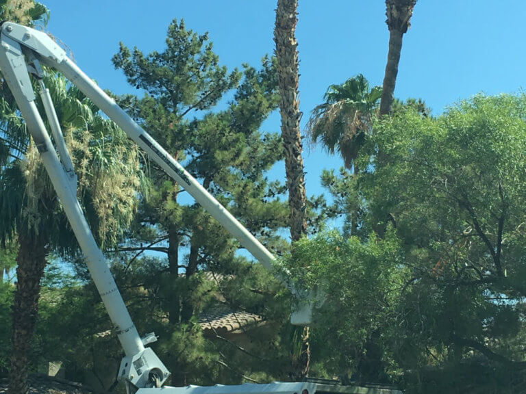 orange county tree removal services